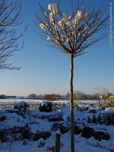 tuinblog, winter, sneeuwlandschap