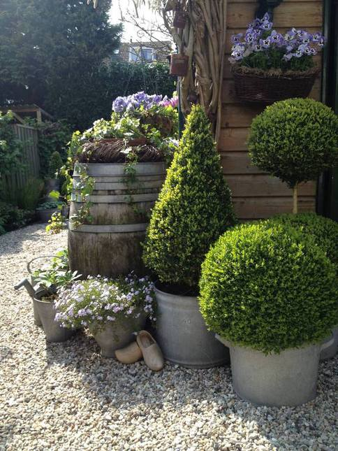 buxus in pot, tuinblog